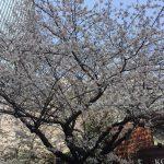 怒涛の、でも気分は桜色の年度末