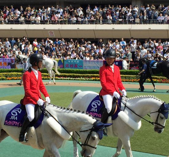 東京競馬場のパドック。美しい誘導馬