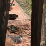 自宅庭でささやかバードウォッチング。意外といろんな鳥が来る!